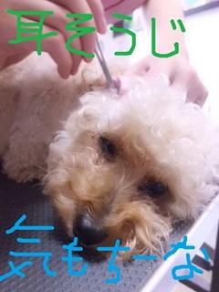 CIMG8583.JPG